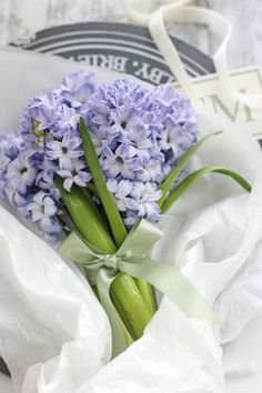 Hyacinths tied with a bow