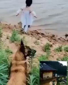 Cute Funny Babies, Funny Dogs, Cute Dogs, Cute Animal Videos, Funny Animal Pictures, Cute Little Animals, Cute Funny Animals, I Love Dogs, Animals Beautiful
