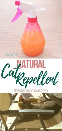 Make a friendly, efficient cat repellent in just a snap! This natural cat repellent is made with a few simple ingredients & won't hurt the environment! Deep Cleaning Tips, House Cleaning Tips, Car Cleaning, Spring Cleaning, Cleaning Hacks, Clean Freak, Professional Cleaning, Simple Life Hacks, Mason Jar Diy