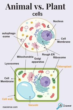 Animal Cell Parts, Animal Cell Structure, Plant Cell Structure, Plant Cell Project Models, Animal Cell Project, Cell Parts And Functions, Plant Cell Diagram, Biology Projects, Plant And Animal Cells