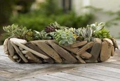 Succulent Garden from VivaTerra Succulents are gorgeous in their dusty, washed-out colors and the driftwood basket makes a beautiful combo.Succulents are gorgeous in their dusty, washed-out colors and the driftwood basket makes a beautiful combo. Driftwood Planters, Driftwood Projects, Driftwood Art, Driftwood Ideas, Driftwood Furniture, Driftwood Chandelier, Driftwood Beach, Beach Wood, Cacti And Succulents