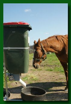 Equine Easy Feeder - Automatic Animal Feeder to feed Alpacas Pigs Chooks Goats Sheep Cattle Horses Automatic Horse Waterer, Automatic Feeder, Hay Feeder For Horses, Horse Feeder, Deer Feeder Diy, Sheep Feeders, Goat Feeder, Feeding Goats, Horse Hay