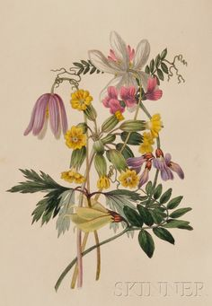 Botanical Illustration; The Moral of Flowers, London: Longman, Rees, et al., 1833,  Skinner