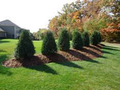 berm and mound landscaping