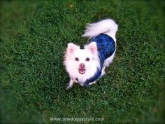 upcycle flannel shirt into small dog coat