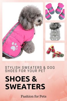 Your pet will look stylish while keeping warm with these great jackets and sweaters. Their little paws will stay protected with these adorable shoes.  Keep them warm this winter. leg warmers for dogs, snowsuits for large dogs, snowsuit for dogs, winter wear for dogs,  thunder vest for dogs,  winter care for dogs,  winter boots for dogs,  winter hats for dogs,  apparel for dogs,  apparel for small dogs,   apparels for dogs,