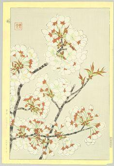 Cherry Blossoms - by Shodo Kawarazaki 1889-1973