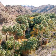 Andres Canyon winds back and forth across a stream, surrounded by palm trees.