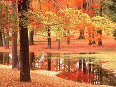 Autumn Trees Photo: This Photo was uploaded by DeborahWhite. Find other Autumn Trees pictures and photos or upload your own with Photobucket free image . Fall Inspiration, First Day Of Autumn, Autumn Scenes, Seasons Of The Year, Fall Season, Belle Photo, Beautiful Landscapes, Autumn Leaves, Fall Trees
