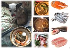 Fish for Your Dog's, Cat's Diet - Selection, Preparation, Recipes - Raw, Cooked   My dogs and cats enjoy raw fish, and fish broth as part of a healthy, raw whole fresh-food diet. If you currently use dry pet food, feeding raw may, or may not be something you are interested in BUT, you can improve your dog's and cat's daily diet by introducing gently cooked whole foods such as fish as treats, or meal toppers.   This article will help you understand how to select, and prepare, and make…