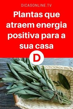Atrair energia positiva | Plantas que atraem energia positiva para a sua casa | Estas plantas atraem energia positiva para a sua casa, ideais para evitar ambientes pesados e repletos de más vibrações ☘️