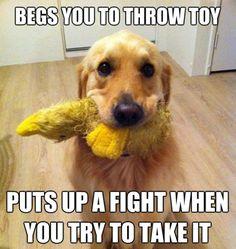 Puppy Logic