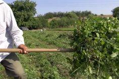 Bulgarian Herb Growers