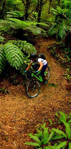 Ideal forest bikes track - Mountain biking has become very popular in NZ. . .there are trails through redwood forests in Rotorua also.