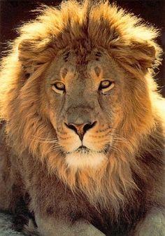 A qual a seu tempo mostrará o bem-aventurado, e único poderoso Senhor, Rei dos reis e Senhor dos senhores; 1 Timóteo 6:15
