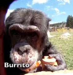 Burrito  <3
