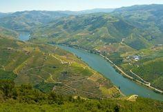 É hora dos vinhos portugueses