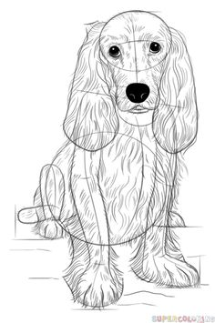 How to draw cocker spaniel dogs and puppies canvas art - Dessin de cocker ...