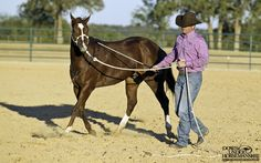 Exercise #24: Circle Driving  Goal: To have the colt trot around beside you in a circle, staying approximately 4 feet away while remaining relaxed, maintaining an arc in his body and keeping slack in the lead rope, both in the circle and during changes of direction.  https://www.downunderhorsemanship.com/Store/Product/MEDIA/D/2896/
