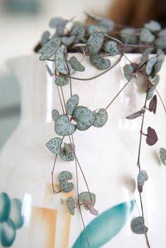 10 plantas com 'estampas' incríveis para ter em casa