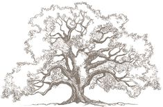 Behold the love tree - an ancient oak that is as symbolically strong and ancient as true love... sighI sketched it for the invite design for some of the events