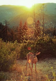 Deer in the sunlight