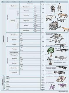 1968 Timeline | Geologic time scale | 40.s board | Pinterest ...