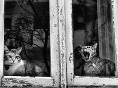 #cats #black and white