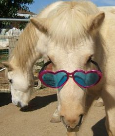 Horse Wearing Glasses | cats with spectacles pets wearing goggles cows wearing a monocle and ...