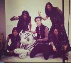 Rawr they look soooo cute andy is just having his hands on the tiger