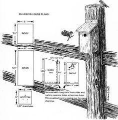 Blue Bird House Plans Blue Bird House Plans So You Are Looking For A Few  Birdhouse Painting Ideas For Your Birdhouse Are You Looking For Solid Paint  Ideas ...