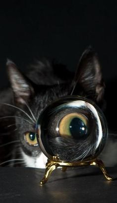 Cats Eye in Crystal Ball