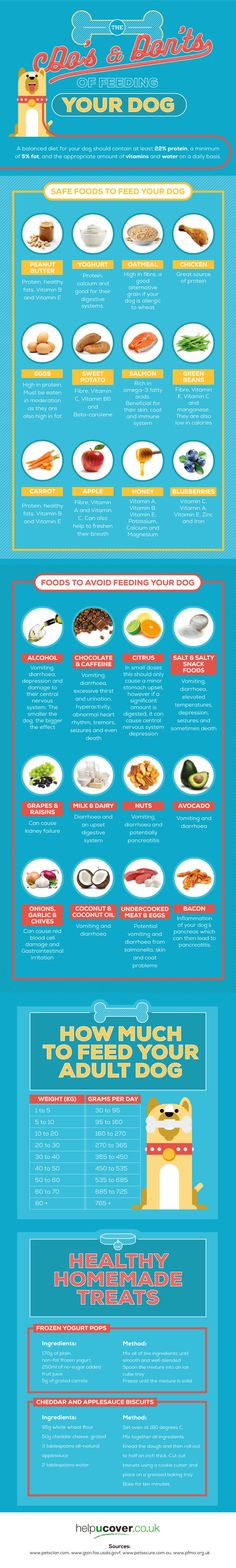 The Do's And Don'ts of Feeding Your Dog #Infographic #Animal #Dogs