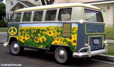 Sunflowers on a Combi Van -- Nannygoatman  --  Sunflowers Pictures Gallery - Freaking News