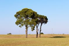 Murgia #Puglia #Murgia #Italia #Canon1200D #sunday #endofsummer
