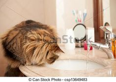 New Stock Photo available for sale at Can Stock Photo - Cat On The Washbasin - stock image, images, royalty free photo, stock photos, stock photograph, stock photographs, picture, pictures, graphic, graphics