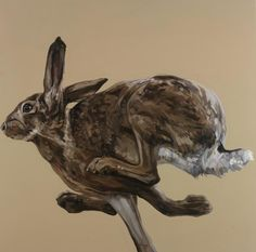 Tania Still Covert Drawings - Hare Running Left