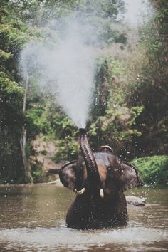An elephant standing in a lake while spraying water up into the air. I Want To Ride On a Elephant in AfricaAn elephant standing in a lake while spraying water up into the air. I Want To Ride On a Elephant in Africa Happy Elephant, Elephant Love, Elephant Shower, Elephant Trunk, Asian Elephant, Elephant Stuff, Elefant Wallpaper, Beautiful Creatures, Animals Beautiful