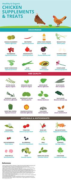 Healthy Chicken Supplements and Treats Guide Infographic Infographic Herbs For Chickens, Raising Backyard Chickens, Urban Chickens, Keeping Chickens, Pet Chickens, Treats For Chickens, Chicken Cages, Chicken Garden, Backyard Chicken Coops