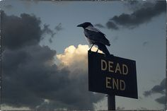 Crow by Dragan*, via Flickr