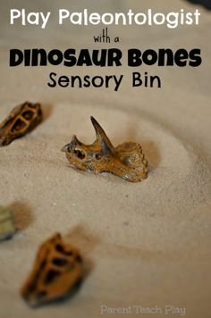 Play Paleontologist: Dinosaur Bones Sensory Bin from Parent Teach Play