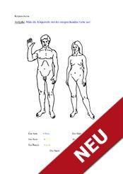 Arbeitsblatt für das Training des Körperschemas
