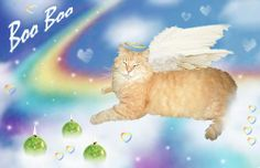 (at)WendyWings kitty #BooBoo