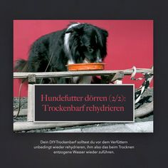 Hundefutter selbst dörren (2/2): Das Trockenbarf rehydrieren   miDoggy Community Movies, Movie Posters, Art, Best Food For Dogs, Dog Owners, Art Background, Films, Film Poster, Kunst