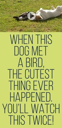 When this dog met a bird, the cutest thing ever happened... you'll watch this twice!