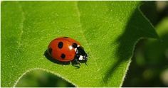As spring and summer begin to settle in across the Upstate, so do the pesky insects that like to feast on our backyard vegetable gardens, flowers and plants. Here are 7 tips for controlling pests naturally. Homemade Plant Fertilizer, Homemade Plant Food, Get Rid Of Aphids, Animal Facts For Kids, Backyard Vegetable Gardens, Preschool At Home, Large Plants, Garden Pests, Positano