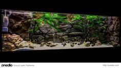 Gerçek doğadan bir kesit gibi görünüyor ama aslında kişiye özel tasarlanmış akvaryumlar.. - onedio.com