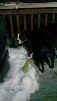 snow boxer pac man  she loved ice