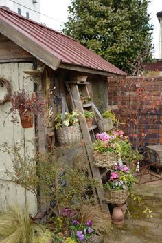 Rustic ladder leaning against garden shed.