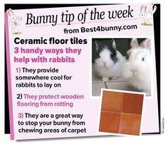 Bunny tip - Ceramic floor tiles come in very handy www.best4bunny.com